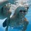 icon_201206_swim.jpg